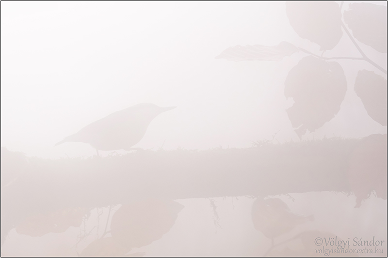 Köderdő - Csuszka - 2019. december, Mecsek