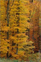 Őszi erdő - 2014. november, Mecsek